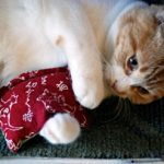 Make a catnip quilt for your cat